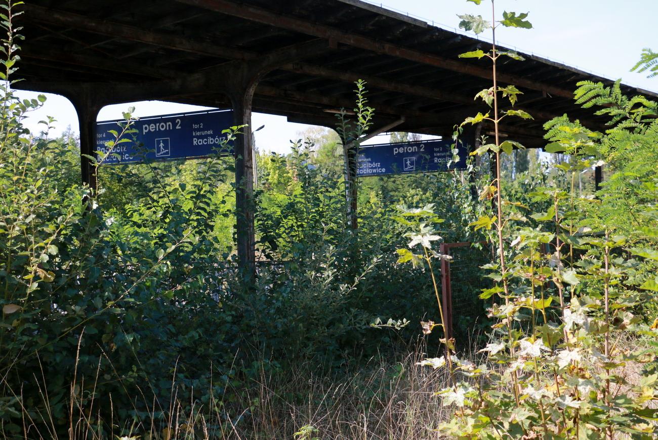 Starania o odtworzenie linii kolejowej Racibórz-Głubczyce. W kwietniu ma być gotowy wniosek o dofinansowanie z programu Koleje Plus