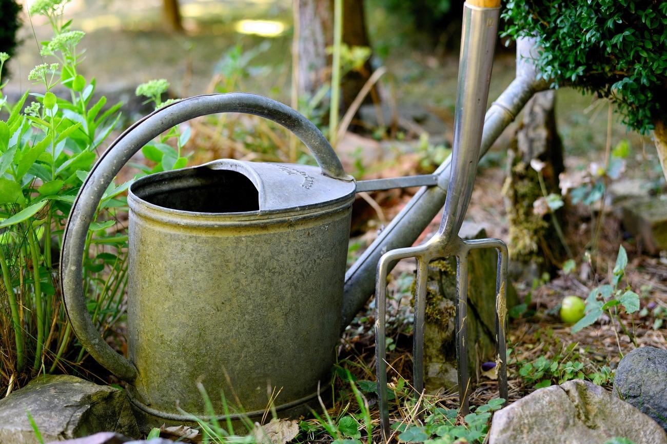 Ogródek [fot. pixabay]