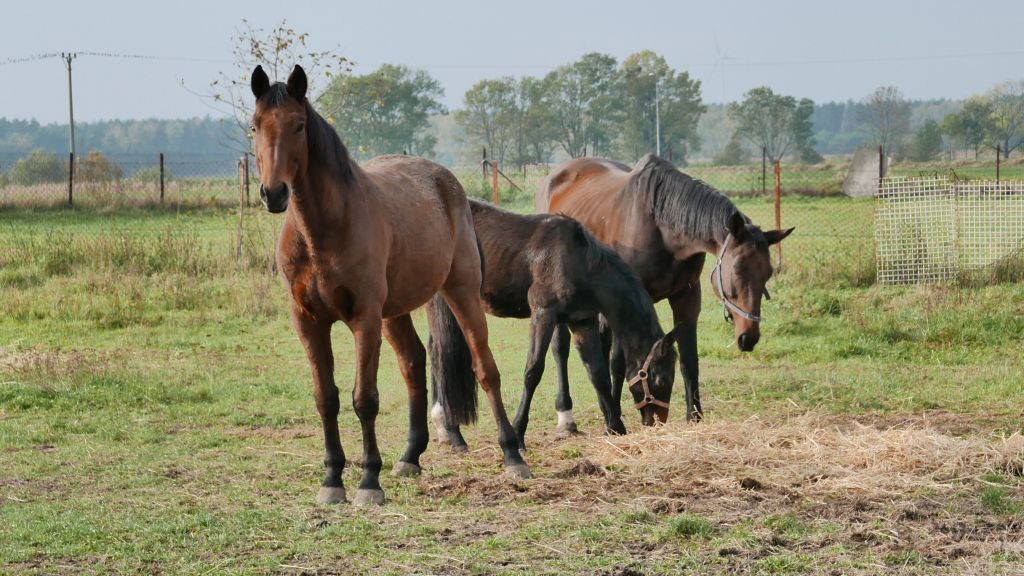 Hodowcy: nie znamy tej pani. Stadnina koni: sprzedaż zgodnie z regulaminem