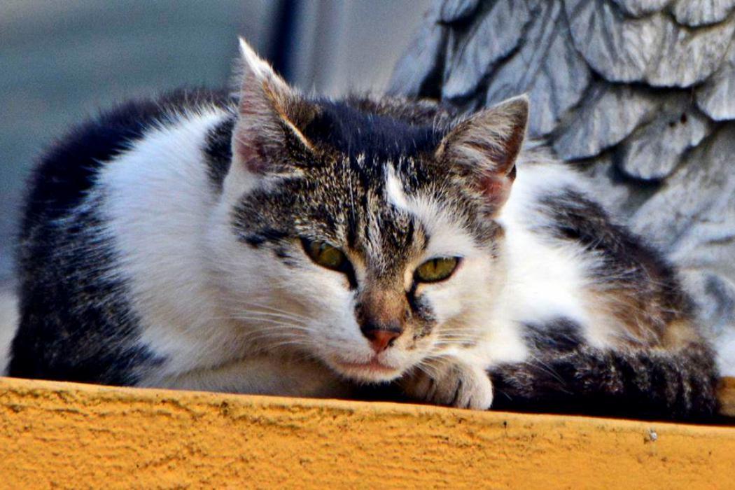 d4c207f31bc03c Nysa pomaga bezdomnym kotom przetrwać zimę - Radio Opole