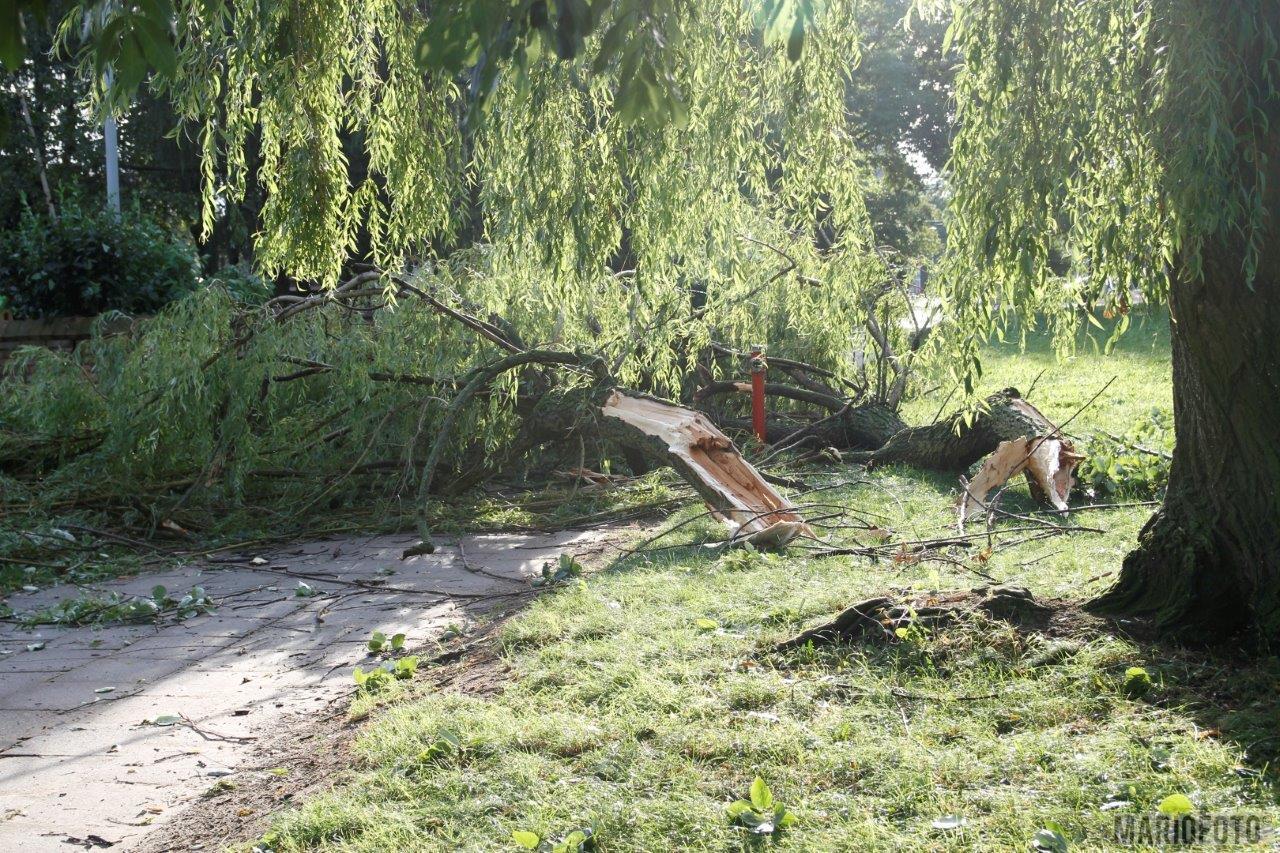 Grodków: podczas burzy drzewo przygniotło kobietę idącą z dzieckiem. Śmigłowiec LPR zabrał ją do szpitala